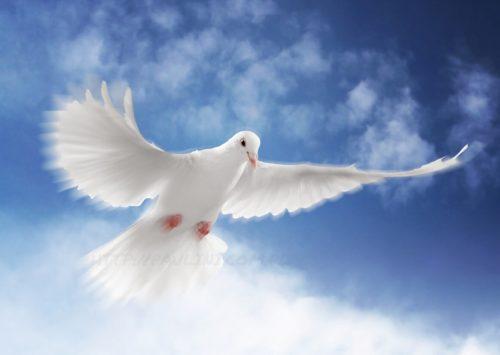 Nowenna przed Uroczystością Zesłania Ducha Świętego w dniach 11 – 19 maja 2018r